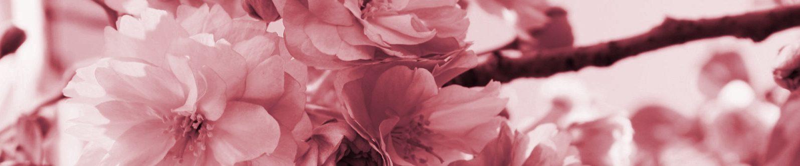 fiori rosa- cornice